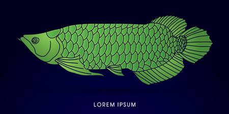 cichlid: Green Arowana Fish, graphic vector. Illustration
