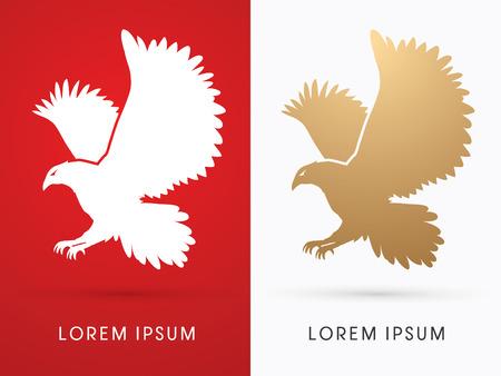 osprey: Eagle flying graphic vector Illustration