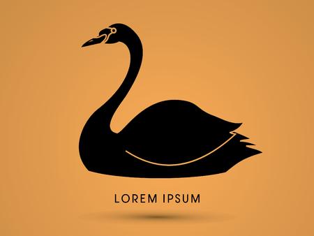 black swan: Black Swan swimming graphic vector