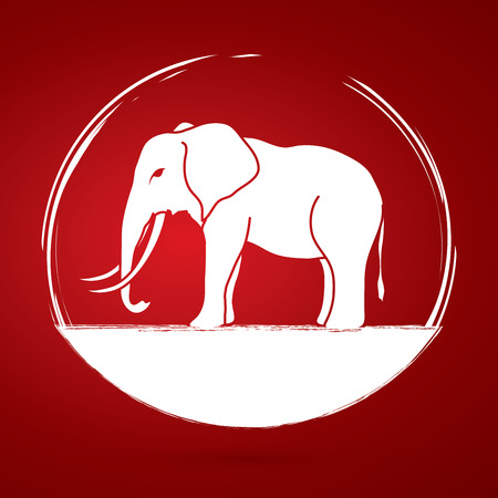 proboscis: Elephant graphic vector. Illustration