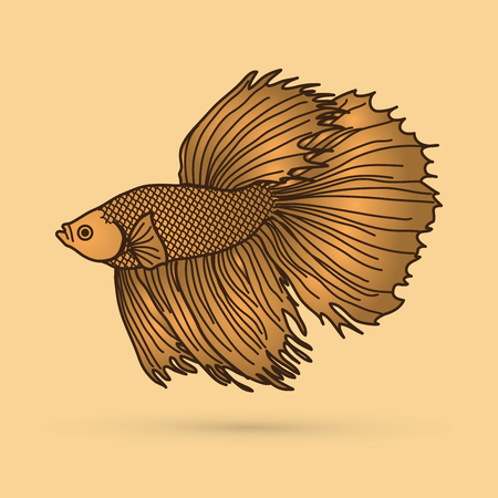 fighting fish: Gold Siamese fighter fish graphic vector. Illustration