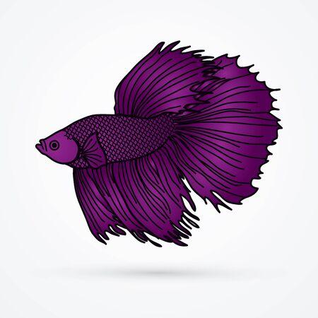 Purple Siamese fighter fish graphic vector.