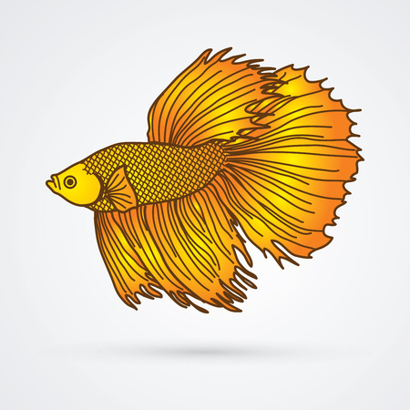 Yellow Siamese fighter fish graphic vector.