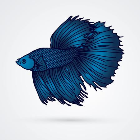 Blue Siamese fighter fish graphic vector. Illustration