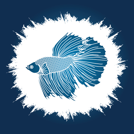 Siamese fighter fish designed on grunge frame background graphic vector.