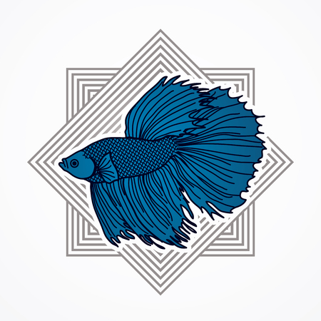 fighting fish: Siamese fighter fish designed on line square background graphic vector.
