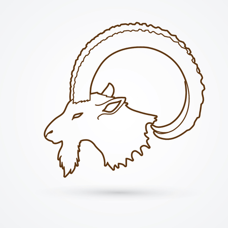 capra: Ibex head with big horn outline graphic vector.
