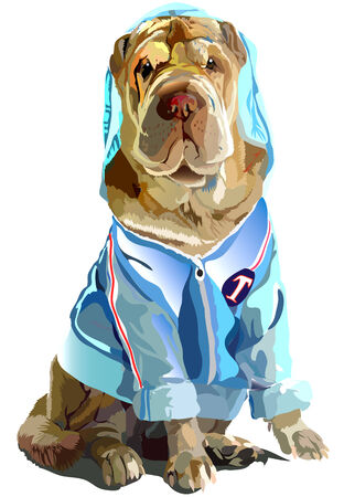 Illustrated sharpei lovely dog  wearing blue t-shirt Illustration