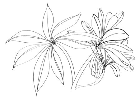 hand drawn flower: black and white sketch flower
