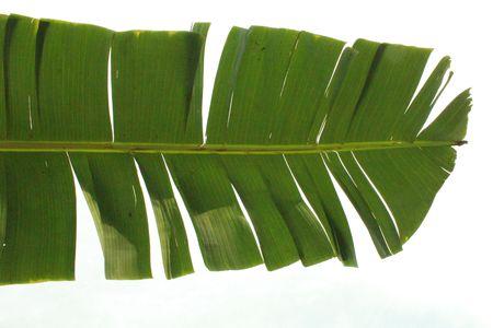 isolated banana leaf