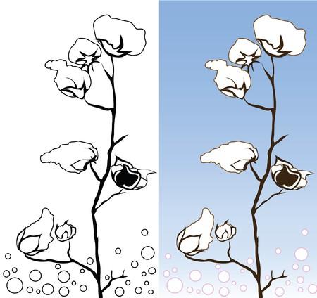 plant gossypium: Cotton fiore 2 colori bianco e blu graphic design  Vettoriali