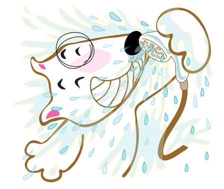bull terrier: Dog Bull terrier shower he very funny and smile
