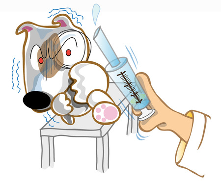 Dog Bull terrier in examination he protection vet injection  is one method to treatment this dog
