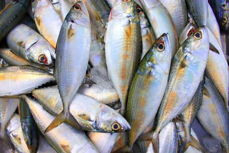 rant: Mackerel very fresh sale Samut Sakhon or Maha Chai Market tour trip in Thailand Asia photo for Food factory, restuarant, shop, cuisine, market