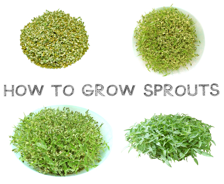 Learn how to grow sprouts at home top view, Third step picture for agriculture examples , How to knowledge and learning, Photo is isolate on white background has free hand draw font. Stock Photo