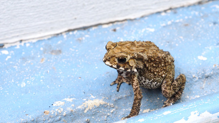 Toad is amphibian his pattern is nice art abstract, Background is cement floor blue color. Stock Photo