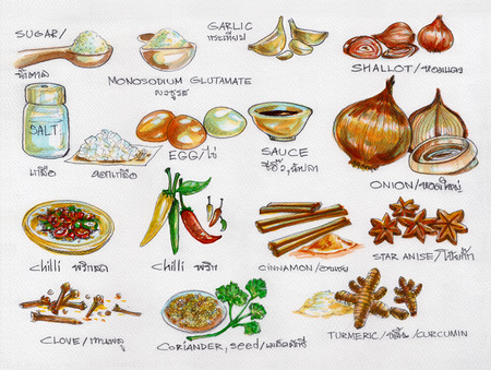 thai herb: Spices raw materials cooking watercolor painting in paper texture 300GSM isolate.