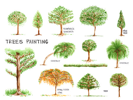 Trees painting isolate on white background, has name of some tree and another is created the new, all no has reference all in my remember.