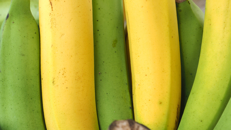 punctuate: Background Cavendish banana green and yellow punctuate color, Close up texture detail.
