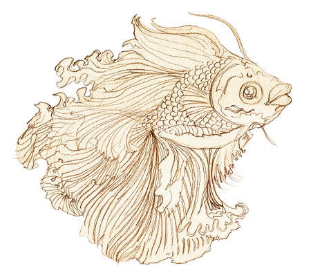 Fighting fish hand drawn Thai applied art unique design on isolate white background