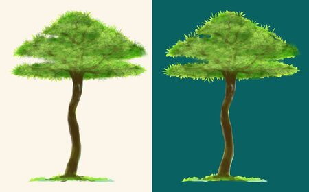 Tree paint brush isolate on white and turquoise background for matching with your image, has clipping paths.