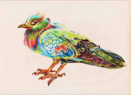 Rock pigeon or dove design applied art pencil color sketch hand drawn on retro paper has clipping paths.