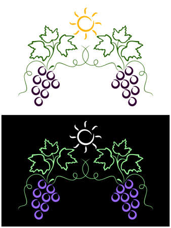 Clusters of vine on white and on a black background.A sun lights above them. Vector