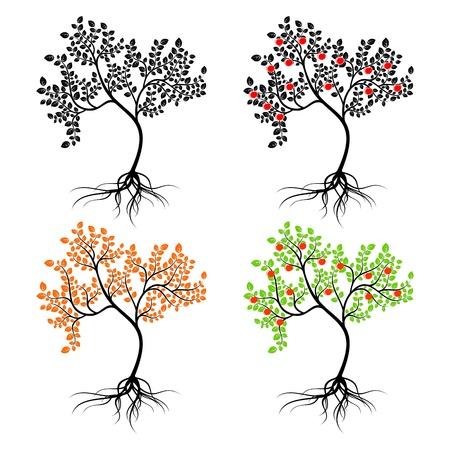 plant with roots: Cuatro �rboles de diferentes aislados sobre un fondo blanco.