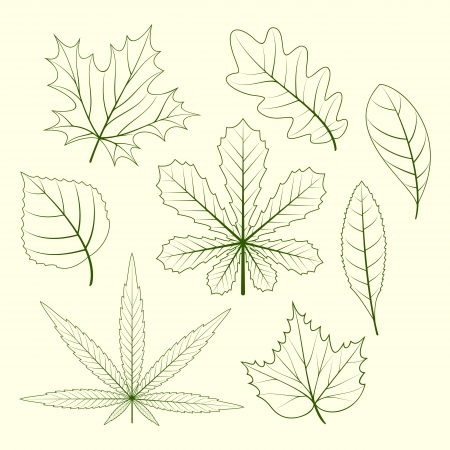 birch leaf: Contours of leaves of various plants on a light background.