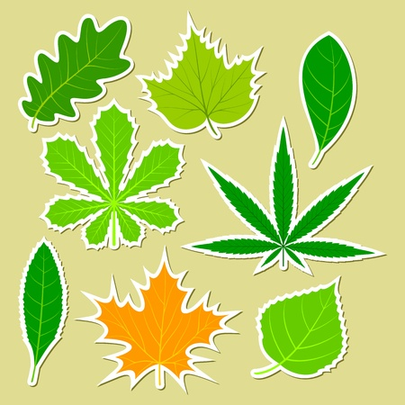 Leaves of various plants in the form of stickers. The isolated objects on a light background. Vector