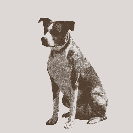 seated: Seated dog  Animal isolated on a light background