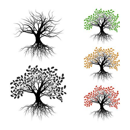 arbol con raices: Set de roble solo de los árboles aislados en un fondo blanco