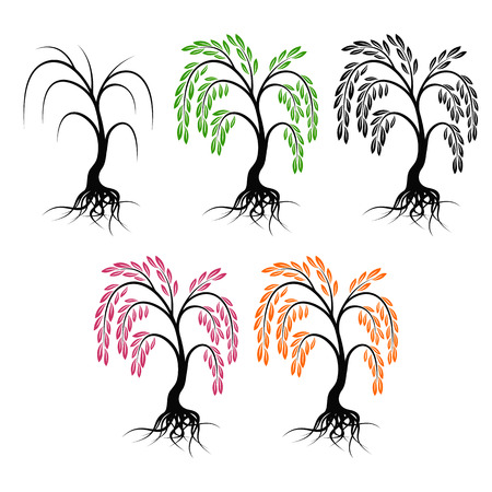 willows: Willow with roots. Set of trees on a white background.