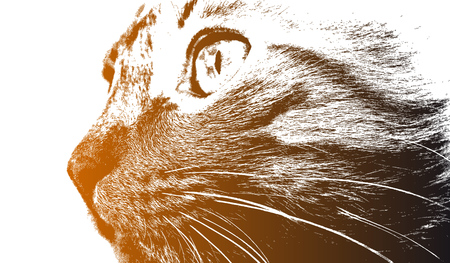 panoramic nature: Head of a cat close up. Illustration