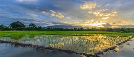 sunset in rainy season Stock Photo - 15565023