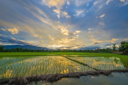 sunset in rainy season  Stock Photo - 15565024