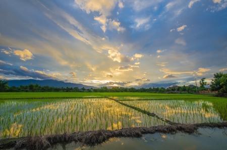 sunset in rainy season Stock Photo - 15565024