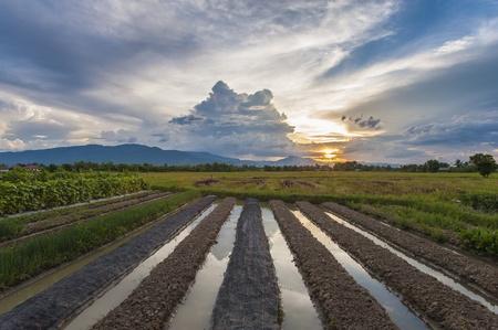 being preparation farmland with dramatic sky photo