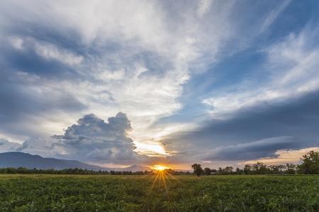 sunset in chili field Stock Photo - 20460944