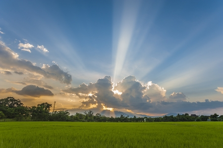 dramatic sunset in rice field photo