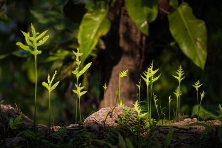 Fern leaf growing in forest. photo