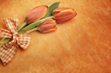 orange easter tulips on orange background with bow, selective focus
