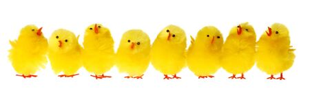Row Of Easter Chicken, white background