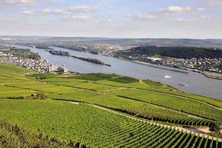 rudesheim: Rheingau Riesling Vineyards and river Rhine near the Niederwalddenkmal