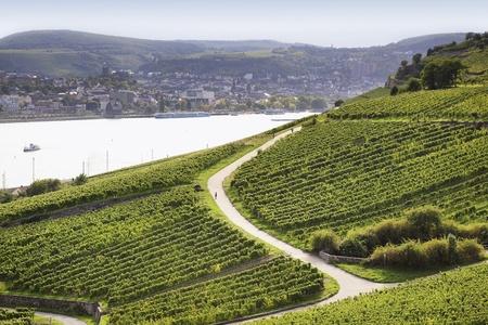 Niederwalddenkmal yakın Rheingau Riesling Vineyards