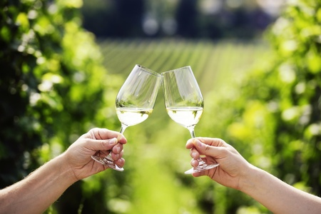 Toasting with two glasses of white wine in vineyard