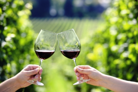 Toasting with two glasses of red wine in the vineyard photo