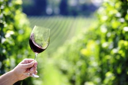 Red wine swiveling in a glass, vineyard in the background