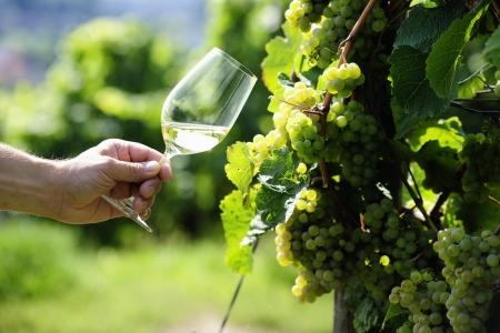 Copa de vino blanco (Riesling) y uvas riesling Foto de archivo - 20834033