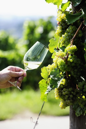 Glas witte wijn (Riesling) en riesling druiven
